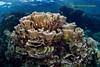 Coral Garden (kayak_no1) Tags: nikon d800e nauticamhousing 15mmsigmafisheye fisheye ysd1 underwater underwaterphotography wa wideangle diving scubadiving uw moalboal philippines