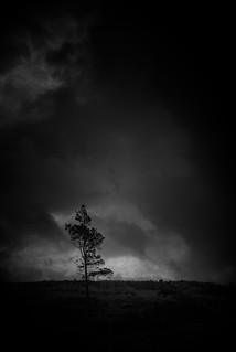 Lone Tree, Altnaharra
