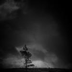 Lone Tree, Altnaharra thumbnail