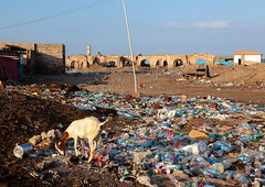 Ruins of the old town after the somalian civil war, Awdal region, Zeila, Somaliland (Eric Lafforgue) Tags: abandoned africa architecture awdal broken collapsing colourimage damaged destruction developingcountry dirty eastafrica garbage goats gulfofaden horizontal hornofafrica humansettlement nopeople oldruin ottomanempire outdoors pollution rubbish rubbishdump ruined socialissues soma6444 somalia somaliland thepast tranquilscene tranquility war wastes zeila awdalregion