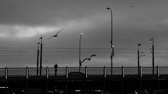 """Picture of loneliness / """"I put my fingers against the glass and bowed my head and cried"""". (Özgür Gürgey) Tags: 169 2016 50mm bw d750 galatabridge joanbaez karaköy nikon evening grainy gulls lines lonely monochrome outdoor poles skyline slender istanbul cityscape"""