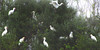 Birds in tree (na_photographs) Tags: vögel heron reiher weis traum traumhaft surreal irreal unreal dream