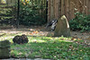 Reuzenmiereneter - Giant anteater - Myrmecophaga tridactyla (desire van meulder) Tags: animals dieren mammals zoogdieren reuzenmiereneter giantanteater myrmecophagatridactyla
