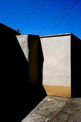 Redruth (lukejesmith) Tags: bird contrast shadow wall redruth