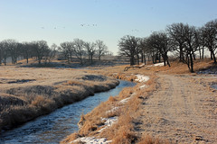 Langerud Creek . . . (doc030395) Tags: iowa worthcounty langerudcreek canadian geese morning frosty runningwater spring earthy colors