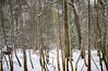 Can't see the woods for the (garethhughes9) Tags: beastfromtheeast snow nature trees woods alderleyedge cheshire