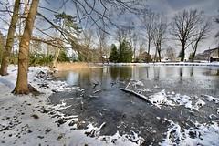 Sunday afternoon in the park (Tobi_2008) Tags: teich pond winter bäume trees himmel sky ciel schönfeld sachsen saxony deutschland germany allemagne germania