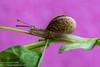 _JRB1813 (yossi rufman) Tags: snails macro d750 nikon tokina 100mm yossi rufman