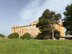IMG_6001 Selinunte (3) (archaeologist_d) Tags: sicily italy selinunte archaeologicalsite archaeologicalruins templee templeofhera
