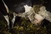 Getrennt nach der Geburt (tierretter.de) Tags: tierqual tierquälerei tierleid tier tiere tierschutz tierrecht tierrechte tierwohl nutztierhaltung intensivtierhaltung artgerecht industrie tierindustrie tierfarbrik tiernutzung tierausbeutung ausbeutung massentierhaltung milch milchbetrieb milchvieh milchviehbetrieb kuh kühe kalb kälber kuhbetrieb rind rinder rinderbetrieb