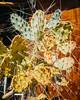 Pearsonville, Ca. (Duvalin Papi) Tags: pearsonville inyocounty california streetphotography sadtographer ghosttown nikond600 vscofilm cactus nopal