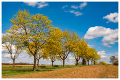Au gré des nationales (Pascale_seg) Tags: landscape paysage route road nationale tree printemps spring moselle lorraine france nikon sky nuages champ country countryside field campagne