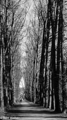 Spaziergang Türnich (weber.bert) Tags: wanderungen analogefotografie blackwhite inbiancoenero noiretblanc grauwertabstufungen sw