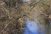 ein Fluss (I-Like-My-Fotos-RAW) Tags: fluss lake water tree baum light shadows schatten licht blau blus nature natur 200d eos200d canon 50mm