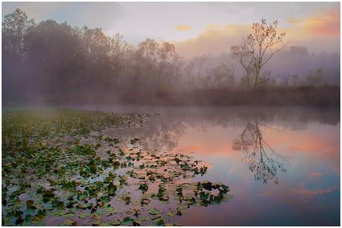 06 - Beaver Marsh Dawn by Harry Hitzeman