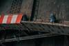 Shelter (Tom Levold (www.levold.de/photosphere)) Tags: cologne fujixt2 köln oskarjägerstr street xf18135mm pigeons tauben brücke bridge