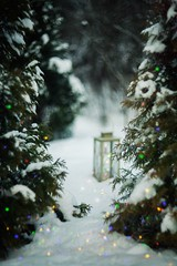 Forestmagic (olli_loo) Tags: magic magicforest manual manuallens manualfocus magical softlens softbokeh sovietlens winter wintertime winterdecor winterforest lantern tinylights fairylight fairygarden inmygarden cozywinter snow snowtime helios40 helios winterbeauty outdoor thuja russianlens evergreen evergreentrees 85mm decor decoration decorinspiration depthoffield forest garland bokeh cozydecor cozytime cozyday cozy frozen coldweather nature naturephoto