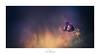 Au coin du feu (Naska Photographie) Tags: naska photographie photo photographe paysage proxy proxyphoto printemps macro macrophotographie macrophoto minimaliste minimalisme extérieur nature forest foret forêt forestier flare fleur flower floral flou fleuri floraison flowers fleurs anémone pulsatille sauvage color couleur bokeh art artistique artist composition feu fire imaginaire imaginarium landscape