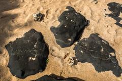 Hawaii USA - Kauai Island. Hanalei Beach. Hanalei Beach. Lava rocks on the beach. (Feridun F. Alkaya) Tags: hawaii kauaiisland wailuafalls kauaisspirit forest waimeacanyonstatepark waimea waimeacanyon hawaiiisland ngc landscape canyon road kauaı grass soil aloha hanaleibeach hanalei usa worldheritagelist unescoheritagelist unesco unc kohala mauna hualalai kilauea volcanos garden sky flower honolulu waikikibeach beach