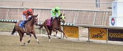 "2018-01-15 r5 Carlos Carasco on #3 AskMe I Might for the win (JLeeFleenor) Tags: photos photography md marylandracing maryland marylandhorseracing laurelpark jockey جُوكِي ""赛马骑师"" jinete ""競馬騎手"" dżokej jocheu คนขี่ม้าแข่ง jóquei žokej kilparatsastaja rennreiter fantino ""경마 기수"" жокей jokey người horses thoroughbreds equine equestrian cheval cavalo cavallo cavall caballo pferd paard perd hevonen hest hestur cal kon konj beygir capall ceffyl cuddy yarraman faras alogo soos kuda uma pfeerd koin حصان кон 马 häst άλογο סוס घोड़ा 馬 koń лошадь"