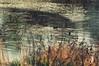 Uluabat gölü misafirleri (Hüseyin Başaoğlu) Tags: nikond300s nikonnikkorpauto180mmf2 8ai hüseyinbaşaoğlu huseyinbasaoglu biga pegai çanakkale dardanel turkei turquie türkiye