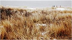 Dunes, plage et la mer du Nord, De Banjaard, Kamperland, Noord-Beveland, Zeelande, Nederland (claude lina) Tags: claudelina nederland hollande paysbas zeeland debanjaard plage dune merdunord noordzee zeelande oyat