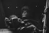 My child, You will outgrow my lap but never my heart. (phrks) Tags: nikon nikonasia nikonsg nikond7200 tamron tamron150600g2 singaporezoo singaporezoologicalgardens motherhood mother motherslove motherslap apes animal orangutan chimpanzee rajansinghphotography