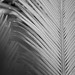 Cycad and the Ego