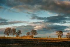 Pomerania (Yuliya Bahr) Tags: spring landscape land field meadow tree trees nature yellow season sky clouds morning sunlight poland pomerania film arable blue