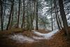 Dusting (pbradyinct) Tags: blackrockstatepark connecticut watertown snow