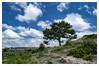 A tree [1359] (my-travels (hurt shoulder not able to comment)) Tags: tree scenery eskişehir eskisehir musaözü turkey landscape nikon d3200 nature sky clouds cloud tr