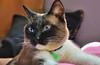 DSC_4056_Aquiles (puertazato) Tags: gato gatos cat cats aquiles nikon d90 nikond90