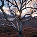 Loch Leven Trees