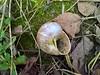 WP_20180316_07_24_09_Raw (vale 83) Tags: snail shell friends coloursplosion colourartaward microsoft lumia 550