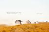 Makgadikgadi Pan (Obliot) Tags: africa carovana safari 2010 traffico foschia erba deserto ofuscato nebbia polvere secco botswana giallo autoritratto makgadikgadi obliot makgadikgadipan pickup bianco viaggio savana