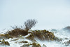 *** (Lee|Ratters) Tags: sony a7 tokina rmc 80200mm crook peak somerset lone tree snow blizzard whiteout