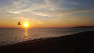 Sunset & Gull, Seaford Beach