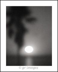 Untitled (GR167) Tags: fullframe canon5dmarklll canon5d canon moonlight impressionism lensbabyvelvet floridakeys moon oof monochrome bwlandscape landscape lensbaby