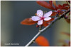 Make It Simple - Calder XT5580e (Harris Hui (in search of light)) Tags: harrishui fujixt1 digitalmirrorlesscamera fuji fujifilm vancouver richmond bc canada vancouverdslrshooter mirrorless fujixambassador xt1 fujixcamera fujixseries fujix fuji80mmf28 fujiprimelens fixedlens plum flower blossom season closeup macro shallowdepthoffield 梅花 composition simple simplicity focus selectivefocus
