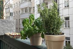 First Meal on the Balcony This Year (maxst001) Tags: 2018yip balkon balkonien gemuese hausoderwohnung hof kraeuter balcony flat house vegetable wien austria