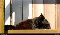 Farm Cat On Duty IMG_1411 (Trevor Durritt) Tags: canoneos600d canonef75300mmf456isus cat farm sleeping ©trevordurritt halesworth suffolk england canonef75300mmf456isusm