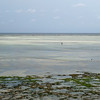 Alone at low tide (Francoise100) Tags: zanzibar tanzania tanzanie ocean sky horizon water waterscape silhouette flat sandbank patterns africa afrique afrika sea beach bay people seascape shore single