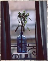 vase bleu avec une fleur (JJ_REY) Tags: vase blue fuji fp100c instantfilm colors toyofield 45a rotelar270mmf56 rodenstock polaroidback405 epson v800 colmar alsace france