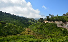 India - Kerala - Munnar - Tea Plantation - 46 (asienman) Tags: india kerala munnar teaplantagen asienmanphotography