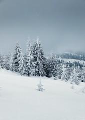 A few weeks ago (desomnis) Tags: winter snow forest wood woods trees nature landscape landscapes landschaft österreich oberösterreich mühlviertel böhmerwald natur desomnis canon5dmarkiv canon5d canon 5d