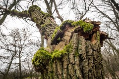 Broken tree (lukasr72) Tags: forest deers green nikon 1855 d3100 photography amateur