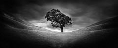 Ghosts (Emerald Imaging Photography) Tags: tree trees lonetree blackandwhite bw hill valley nsw australia australian australianlandscape sydney bowral clouds winter fine art
