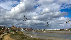 Maldon (Just landscapes) Tags: clouds birds seagulls thamesbarges water estuary river blackwaterestuary maldon essex uk england iphone7 iphone landscape