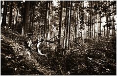 Gestrüpp (Claudio Taras) Tags: claudio contrasto controluce canon canona1 film fomapan pushed paesaggio trier tree analogica analogico a1 autunno rodinal fullframe bw bokeh biancoenero bokehlicious black taras toned foresta legno foglie linee