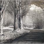 Pathway Trees thumbnail